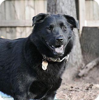 Labrador Retriever/Labrador Retriever Mix Dog for adoption in McDonough, Georgia - Piper