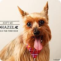 Adopt A Pet :: Hazel-Pending Adoption - Omaha, NE