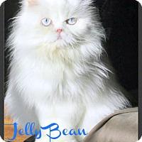 Adopt A Pet :: Jelly Bean - Gilbert, AZ