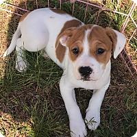 Adopt A Pet :: Heart - Toms River, NJ
