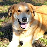 Adopt A Pet :: Max - Lafayette, IN