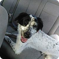 Adopt A Pet :: Kai - Lexington, KY