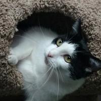 Adopt A Pet :: Zazzles - Des Moines, IA