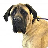 Adopt A Pet :: Willow - Goodyear, AZ