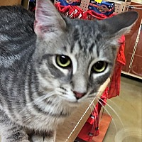 Adopt A Pet :: Truman - Morganton, NC