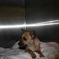 Adopt A Pet :: SUSIE - Los Angeles, CA