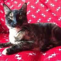 Adopt A Pet :: Walnut - Maryville, MO