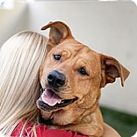 Adopt A Pet :: Miley - Mission Viejo, CA