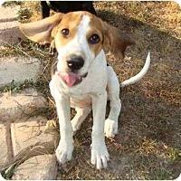 Adopt A Pet :: Daisy Loo - Plainfield, CT
