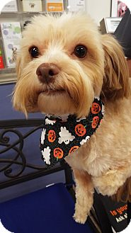 Terrier (Unknown Type, Small) Mix Dog for adoption in Covina, California - Teddy
