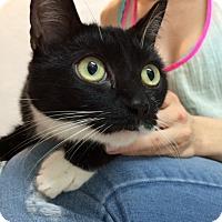 Adopt A Pet :: Miriam - Brooklyn, NY