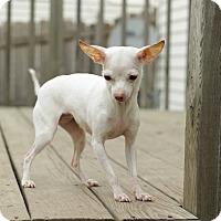 Adopt A Pet :: Freida - Romeoville, IL