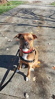 Pit Bull Terrier Dog for adoption in Berea, Ohio - Penny