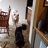 Adopt A Pet :: Lexy - Blue Bell, PA