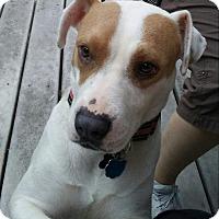 Adopt A Pet :: Petal - Marietta, GA