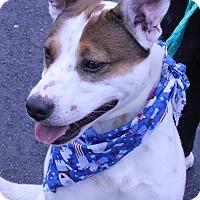 Adopt A Pet :: MAX - Clayton, NJ