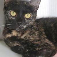 Adopt A Pet :: Valerie - Carrollton, GA
