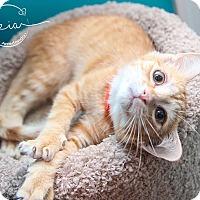 Adopt A Pet :: A..  Gavin - Charlotte, NC