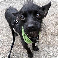 Adopt A Pet :: Raisin! *LA* - Los Angeles, CA