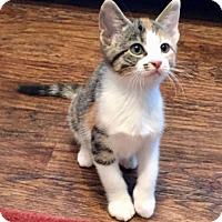 Adopt A Pet :: Fanny - Dallas, TX