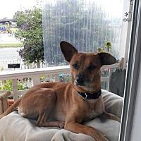 Adopt A Pet :: Timmy - Richmond, CA