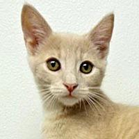 Adopt A Pet :: Flannigan - Westlake Village, CA