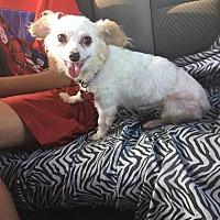 Adopt A Pet :: Wendy - Fullerton, CA