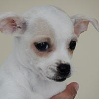 Adopt A Pet :: Maria - Long Beach, NY