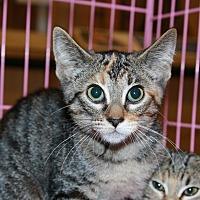 Adopt A Pet :: Sadie - Rochester, MN