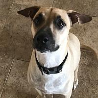 Adopt A Pet :: Cody - Bend, OR