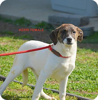 Terrier (Unknown Type, Small) Mix Dog for adoption in Grenada, Mississippi - Kerri