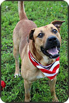 Rhodesian Ridgeback/Rottweiler Mix Dog for adoption in Dunkirk, New York - Chewy