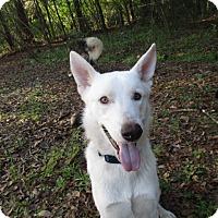 Adopt A Pet :: Juneau - Green Cove Springs, FL