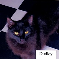 Adopt A Pet :: Dudley - El Dorado Hills, CA