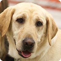 Adopt A Pet :: Mona - Minneapolis, MN