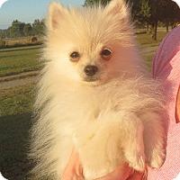 Adopt A Pet :: Andre - Greenville, RI