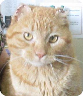 Domestic Shorthair Cat for adoption in Lloydminster, Alberta - Anchor