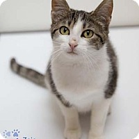 Adopt A Pet :: Zoie - Merrifield, VA