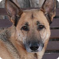 Adopt A Pet :: Boris von Bonn - Los Angeles, CA