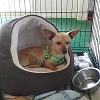 Adopt A Pet :: Dale - San Diego, CA