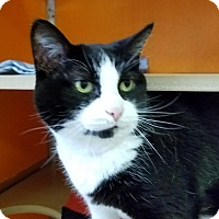 Adopt A Pet :: Penny - Elyria, OH
