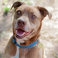 Adopt A Pet :: Gremlin - Pittsburg, KS