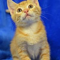 Adopt A Pet :: Morty 170991 - Atlanta, GA