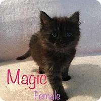 Adopt A Pet :: Magic - sylmar, CA