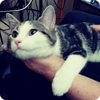 Adopt A Pet :: Bean - Trevose, PA