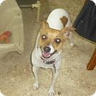 Adopt A Pet :: Zizi