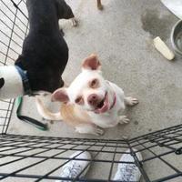 Adopt A Pet :: Jimmy - Maryville, TN