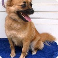 Adopt A Pet :: Bonnie - Birch Tree, MO