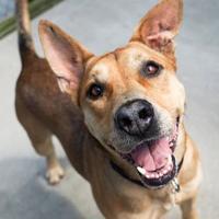 Adopt A Pet :: Canelo - New Freedom, PA