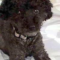 Adopt A Pet :: MISSY - Hurricane, UT